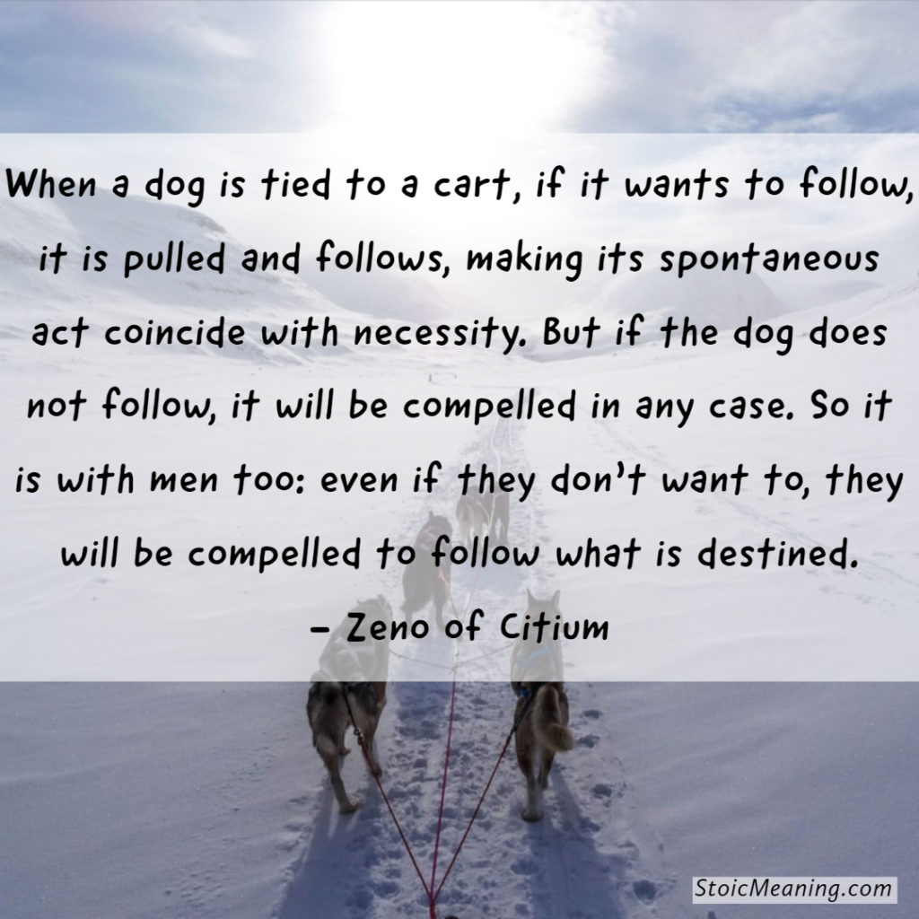 When a dog is tied to a cart, if it wants to follow, it is pulled and follows, making its spontaneous act coincide with necessity. But if the dog does not follow, it will be compelled in any case. So it is with men too: even if they don't want to, they will be compelled to follow what is destined. - Zeno of Citium